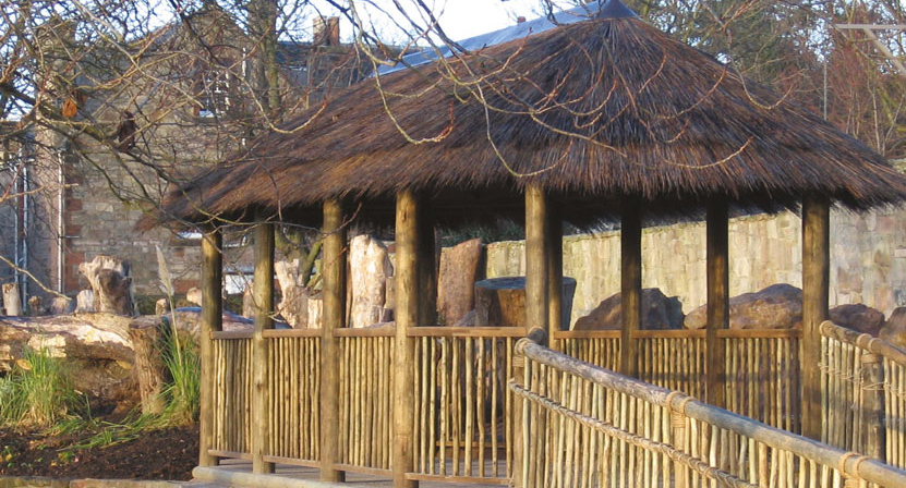 Edinburgh-zoo-1
