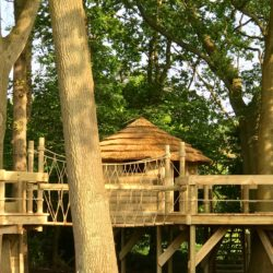 Thatched treehouse seen through oak trees. Created by Treehouse Life with thatch tiles provided by Africa Roofing UK