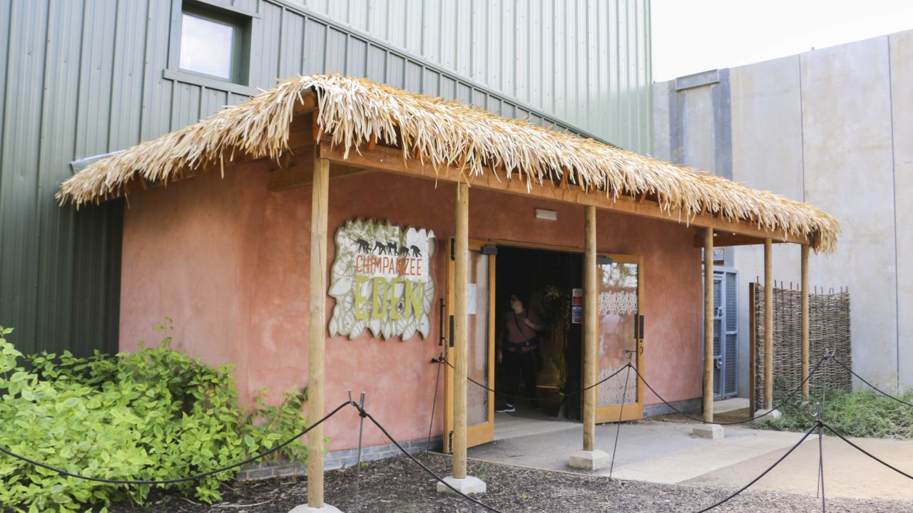 Entrance to the Chimpanzee Eden at Twycross Zoo. Artificial Fibre Palm thatching supplied by Africa Roofing UK