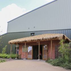 Entrance to the Chimpanzee Eden at Twycross Zoo. Artificial Fibre Palm thatching supplied by Africa Roofing
