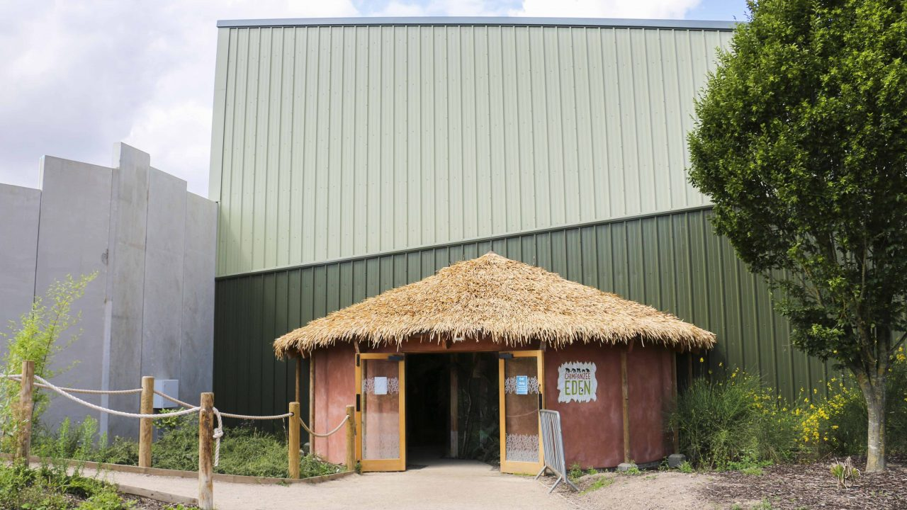 The rondavel style exit to the Chimpanzee Eden at Twycross Zoo. Artificial Fibre Palm thatching supplied by Africa Roofing