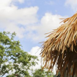 A close up of the thatched roof overhanging the entrance to the Chimpanzee Eden at Twycross Zoo. Artificial Fibre Palm thatching supplied by Africa Roofing